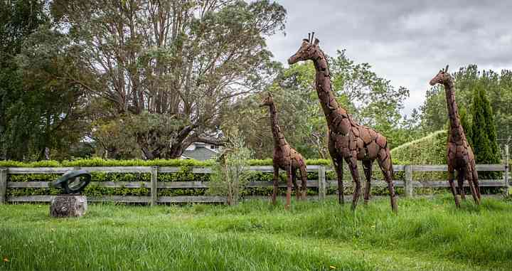 Giraffe Sculptures at Birdwood exhibition