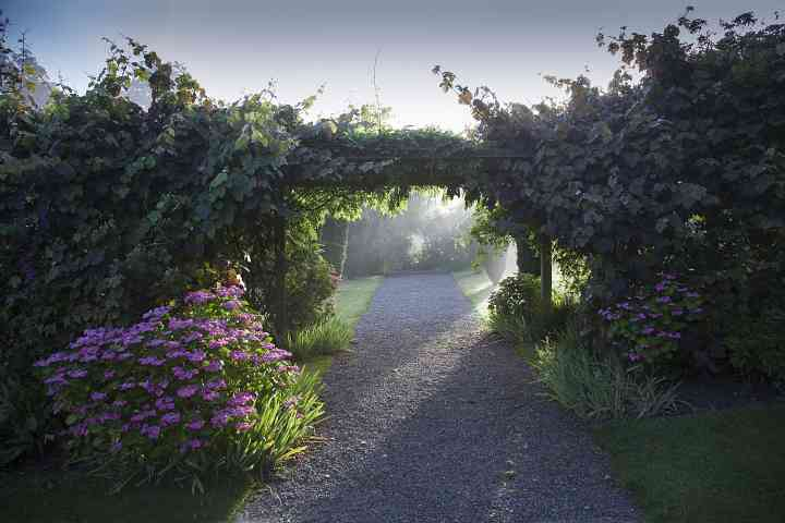 Early morning sunshine through the Yew walk and Pergola