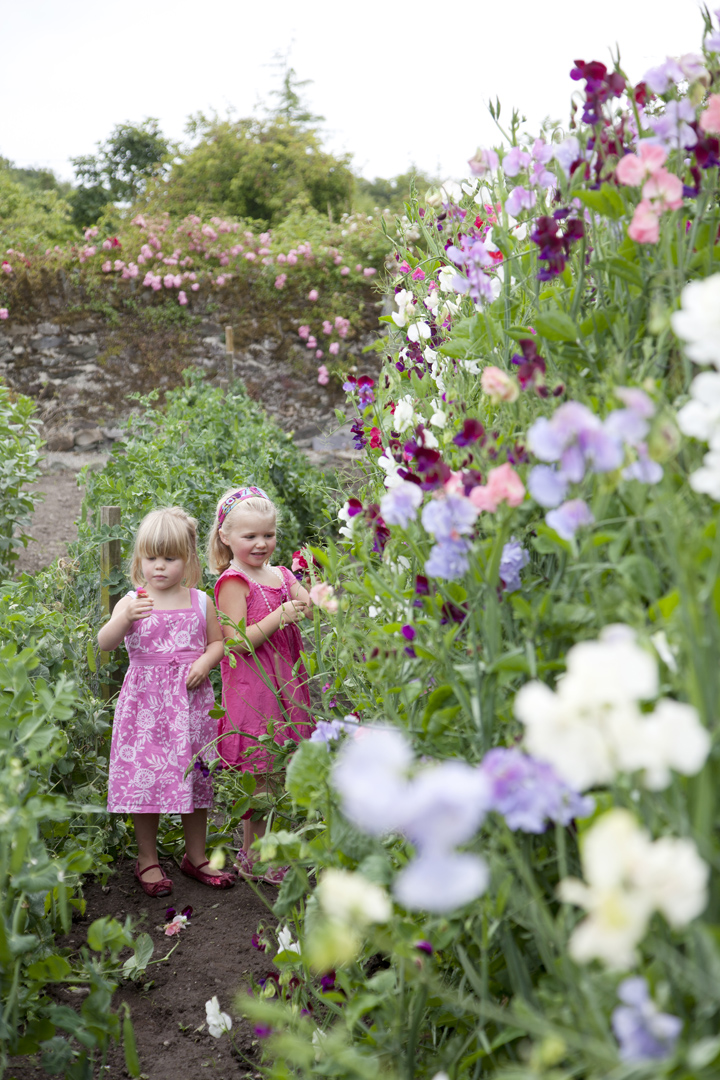 Bella and Mimi picking sweet peas in the walled garden